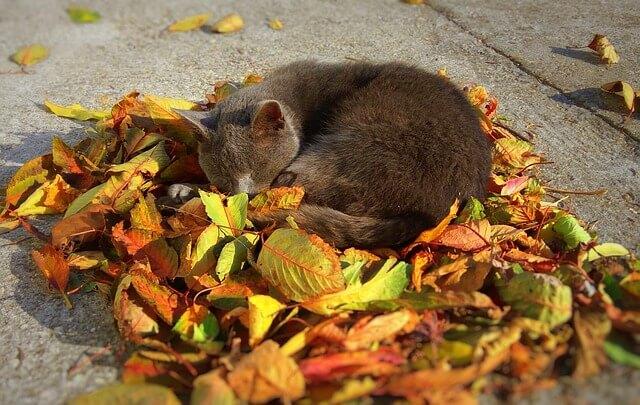 genügend Schlaf gegen den Herbstblues